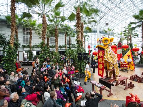 Lantern Festival Celebration for Chinese New Year at Navy Peir