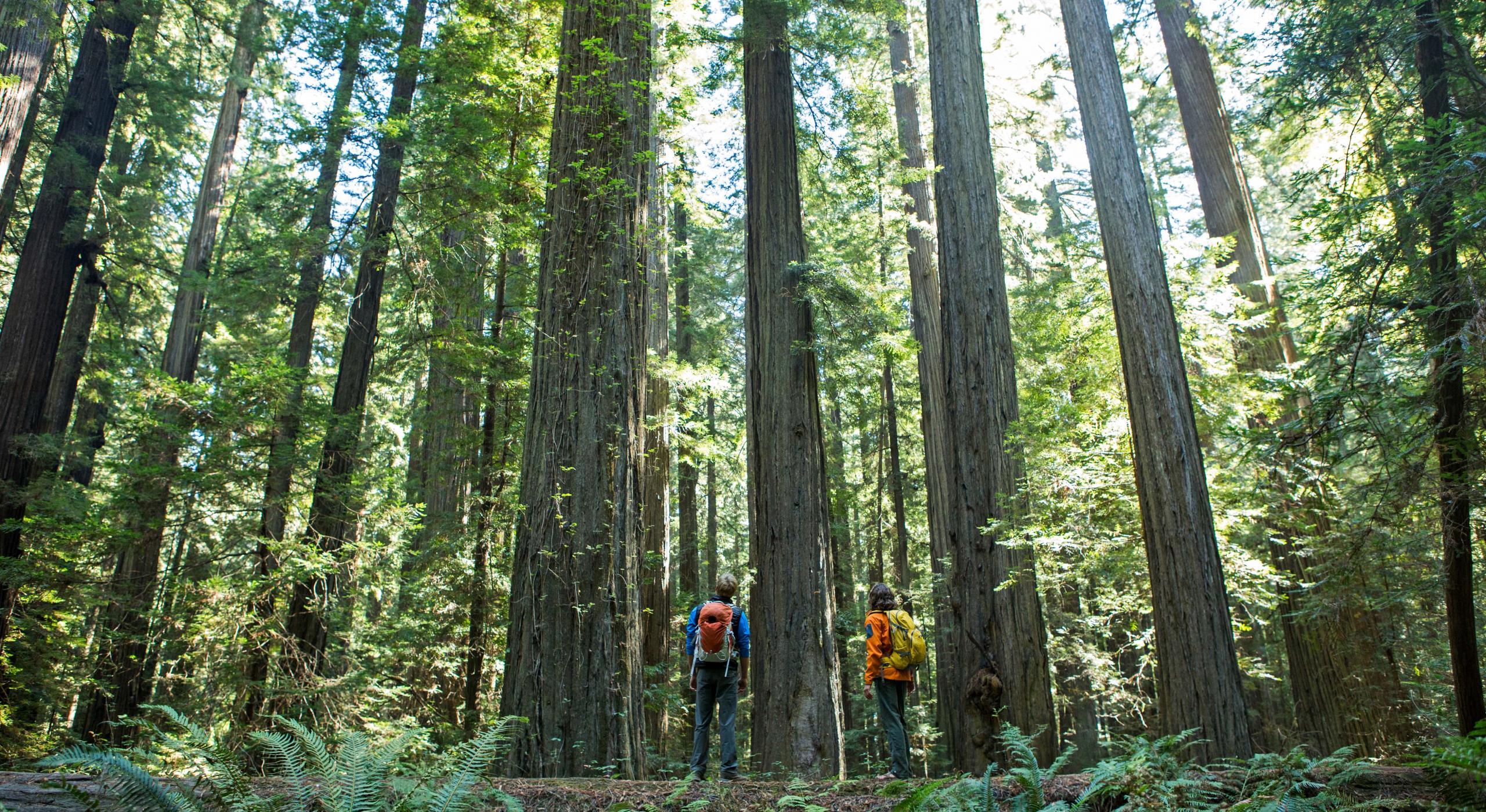 Redwood National y State Parks (Parques nacional y estatal de Redwood) |  Visit The USA